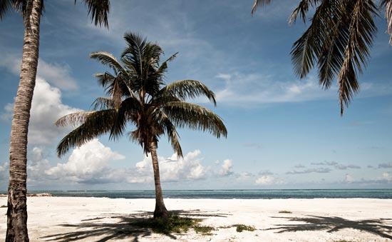 Palmen-und-Strand